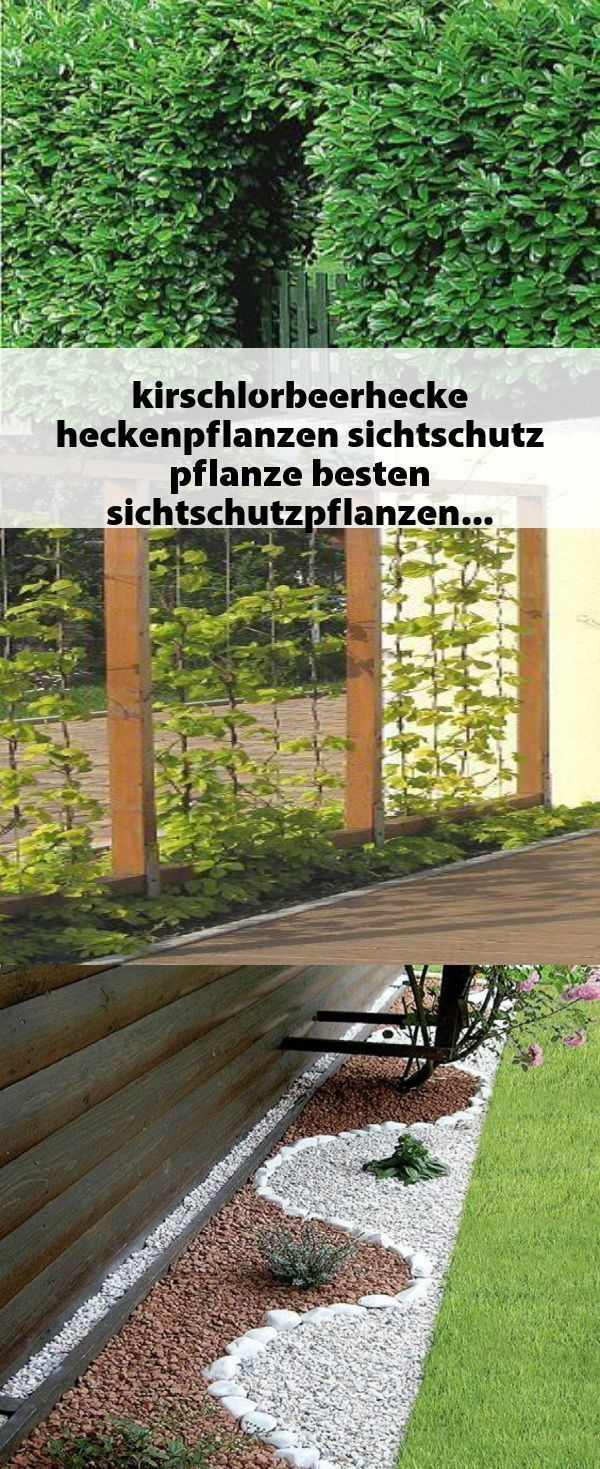 #kirschlorbeerhecke #heckenpflanzen #sichtschutz #pflanze #besten #sichtschutzpflanzen #besten #heckenpflanzen #kirschlorbeerhecke #pflanze #Sichtschutz #kirschlorbeerhecke #heckenpflanzen #sichtschutz #pflanze #besten         #kirschlorbeerhecke #heckenpflanzen #sichtschutz #pflanze #besten #sichtschutzpflanzen #kirschlorbeerhecke #heckenpflanzen #sichtschutz #pflanze #besten #sichtschutzpflanzen #besten #heckenpflanzen #kirschlorbeerhecke #pflanze #Sichtschutz #kirschlorbeerhecke #heckenpflanz #sichtschutzpflanzen