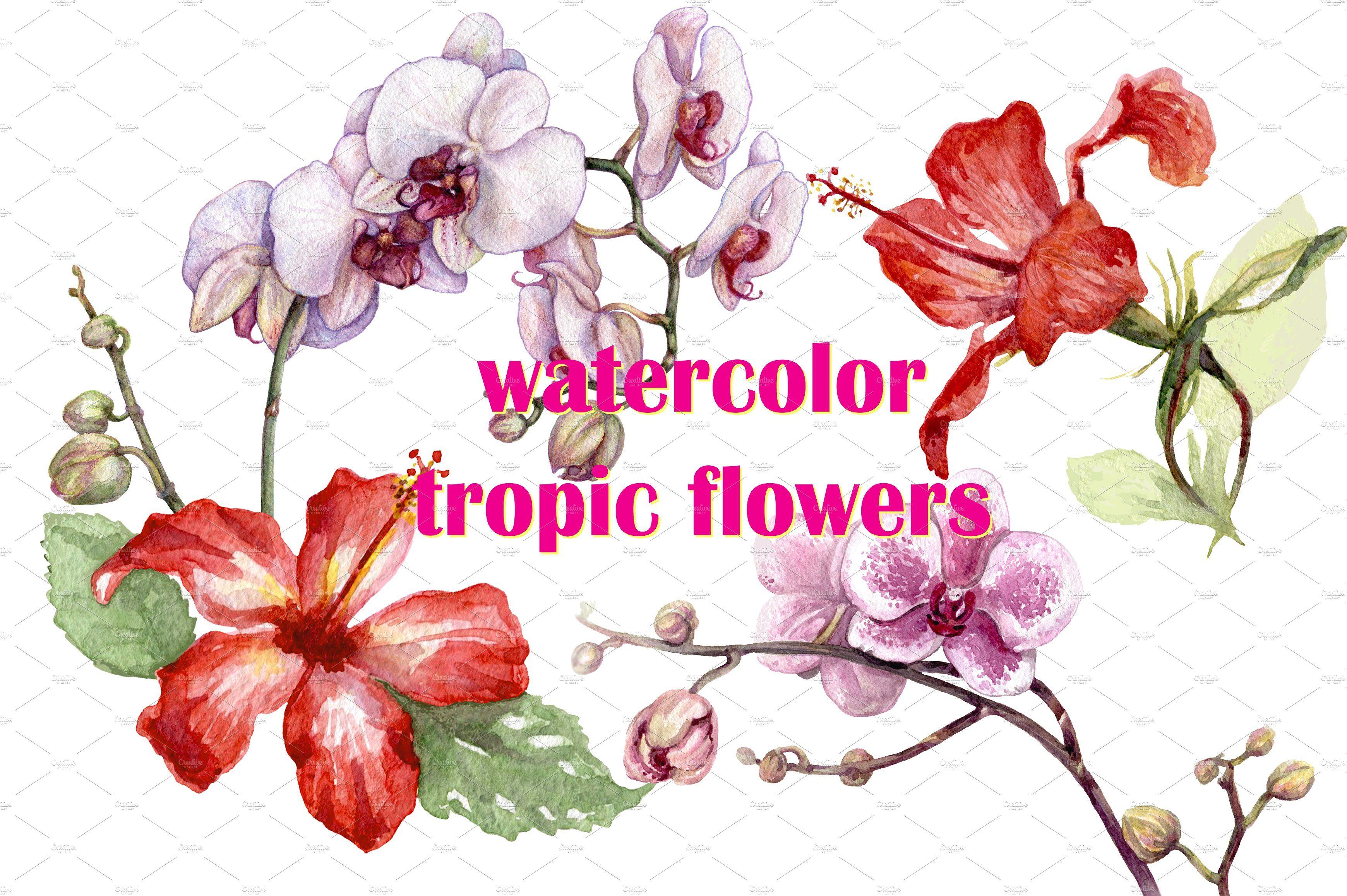 Watercolor tropical plants by valentyna smordova on creativemarket