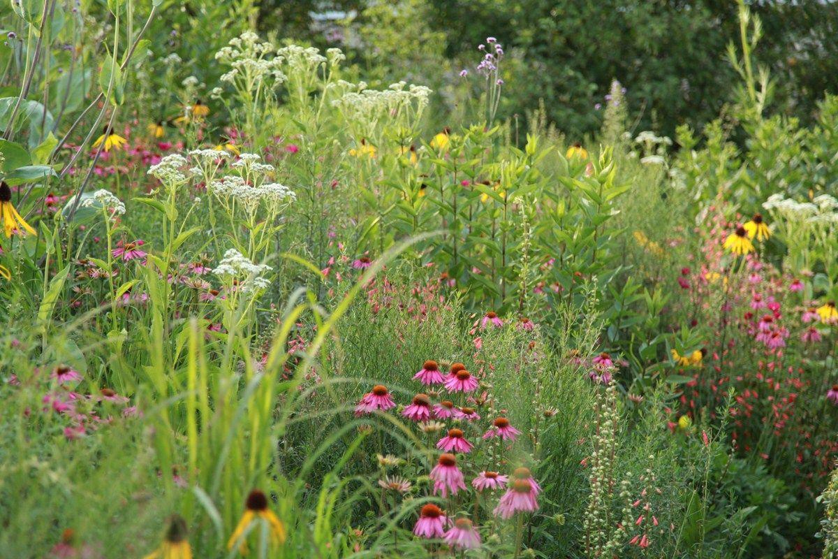 Sarah Price Olympic Gardens North America Olympic Garden Prairie Planting Natural Garden