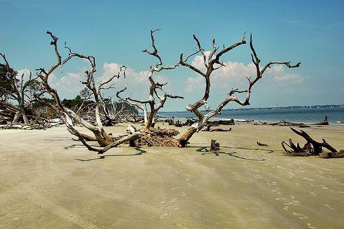 Driftwood Beach Boneyard Jekyll Island