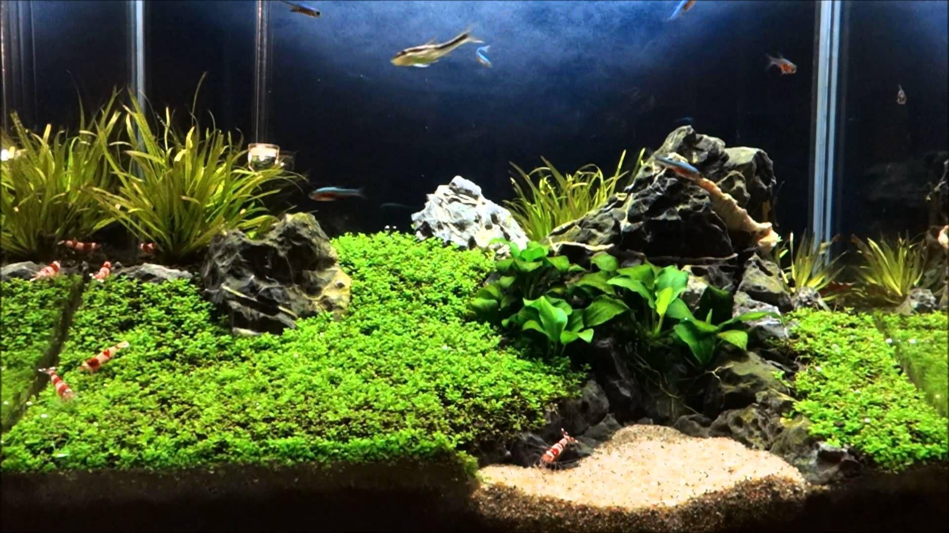 2 5 gallon fish tank aquarium pinterest fish tanks for 2 gallon fish tank