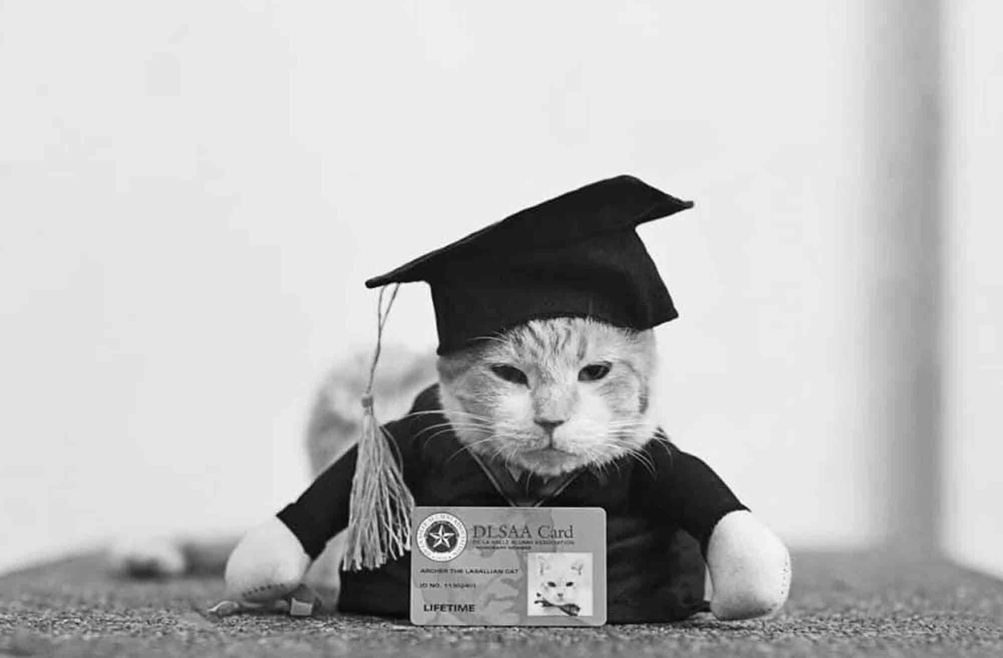 Pin On Holiday Kitties
