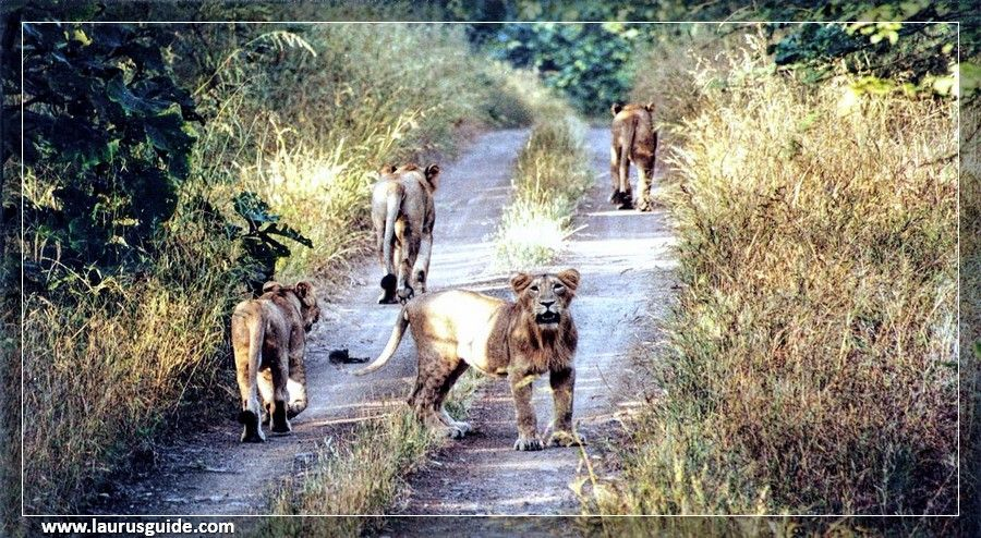 The Anshi National Park is an evergreen tropical