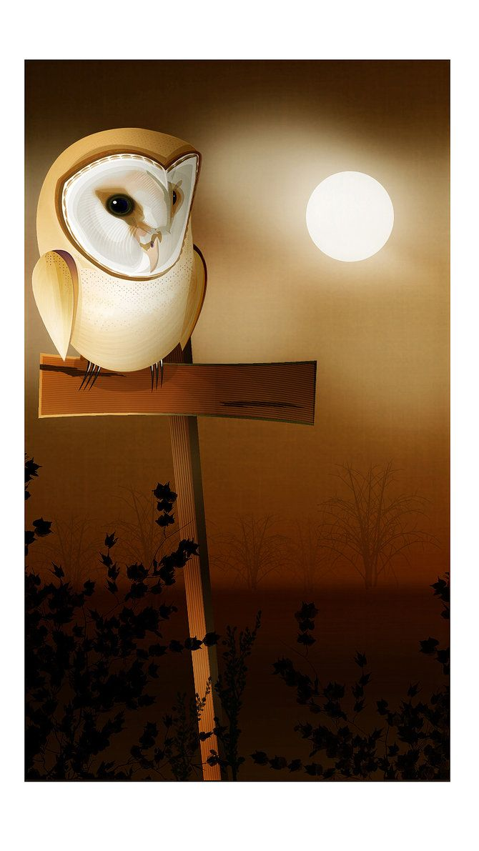 'Barn Owl' by Steve RS Worth