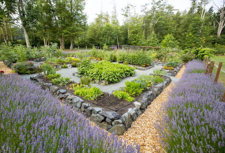 Lavender Hedging Surrounds The Matheses Vegetable Gardens The Raised Stone Beds Help Keep The Soil Warm Mike Siege Garden Beds Lavender Hedge Raised Garden
