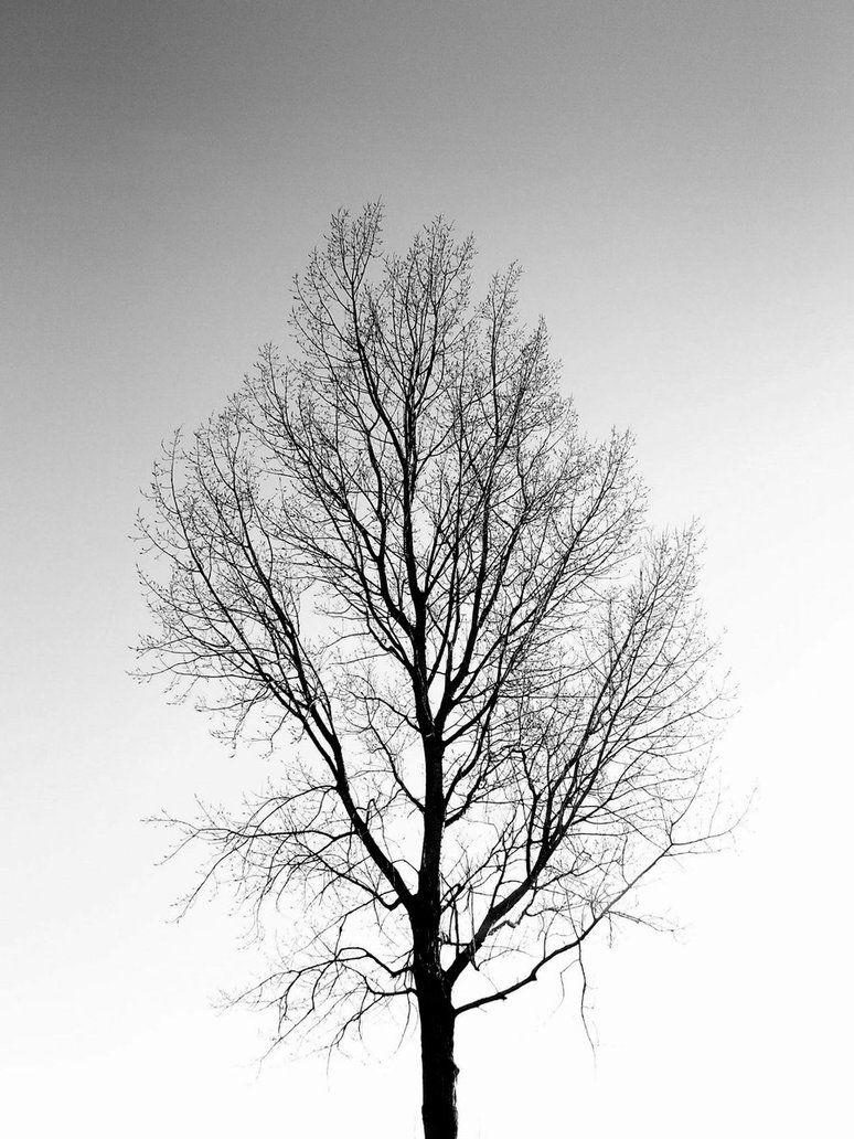 фотобанк черно белые деревья выборе