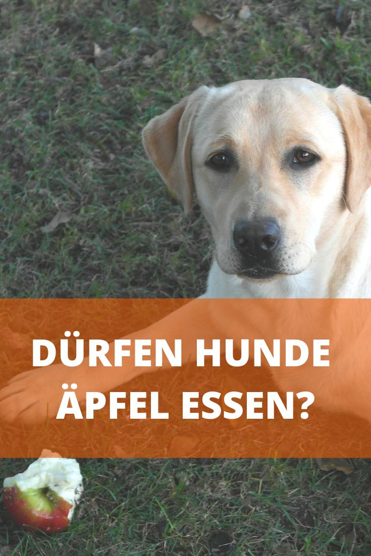 Durfen Hunde Apfel Essen Auch Mit Schale Hunde Hunde Ernahrung