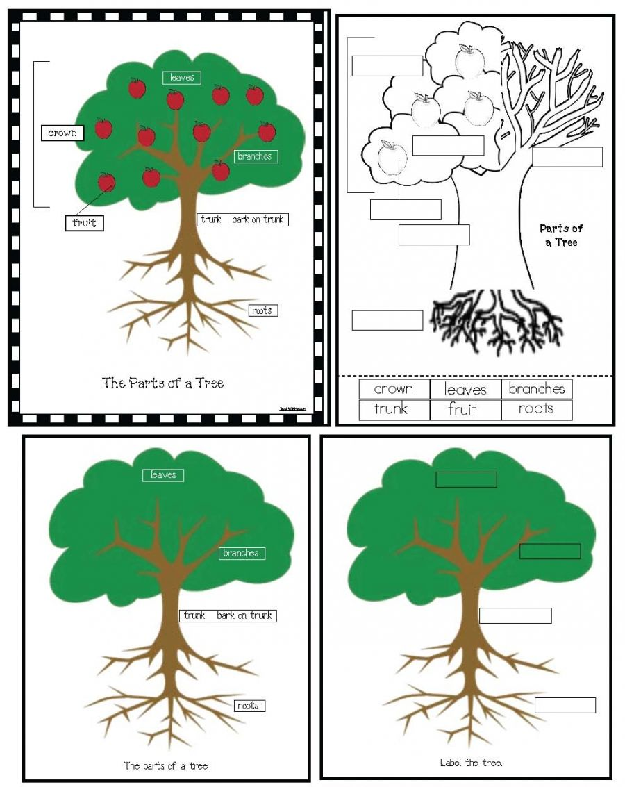 Parts Of A Tree Poster Activity | Anchor charts, Chart and Activities