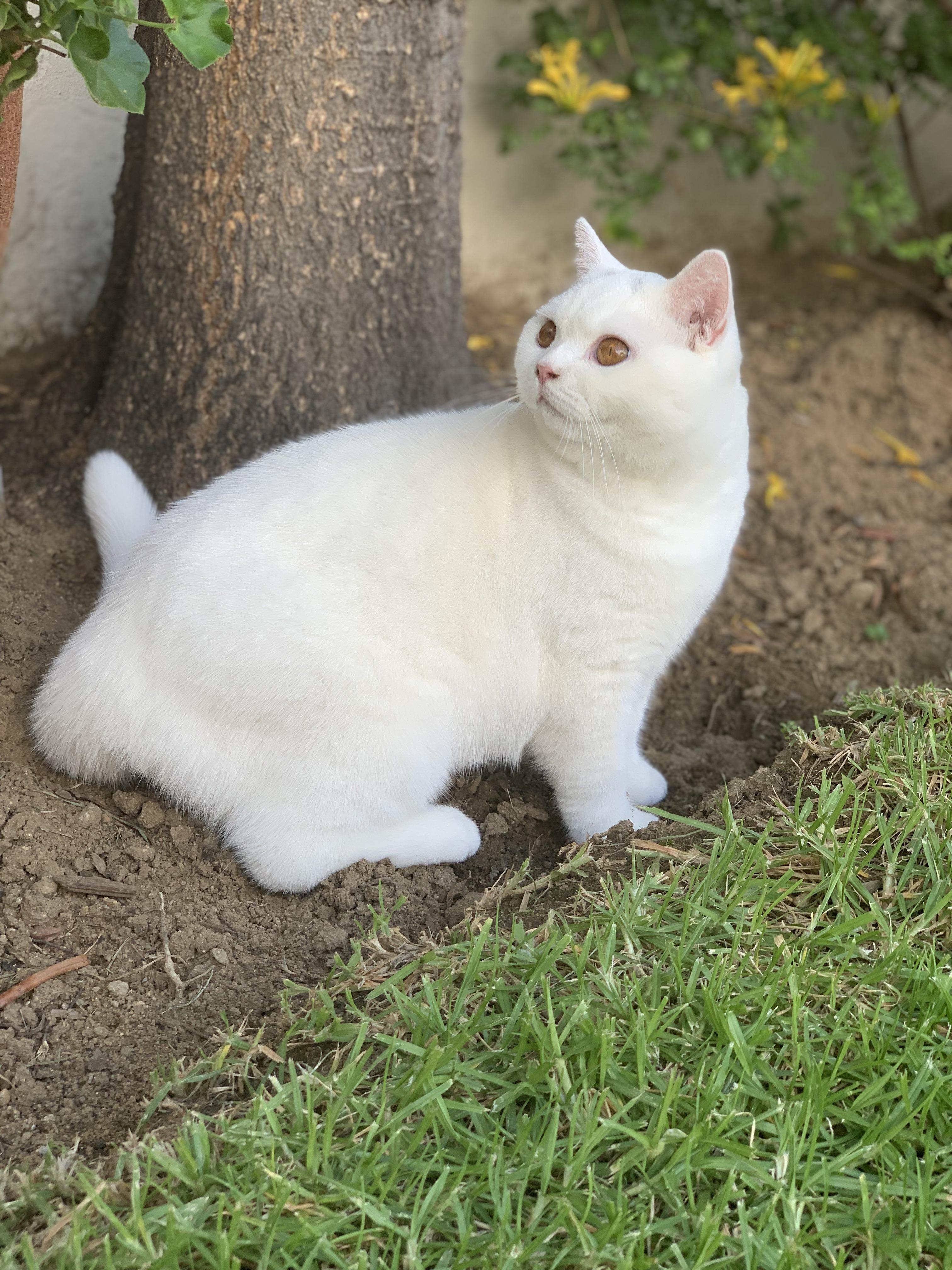 Cheshire Cat にゃんこ 猫 にゃん