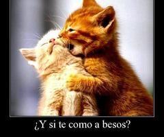 besos de gatos!