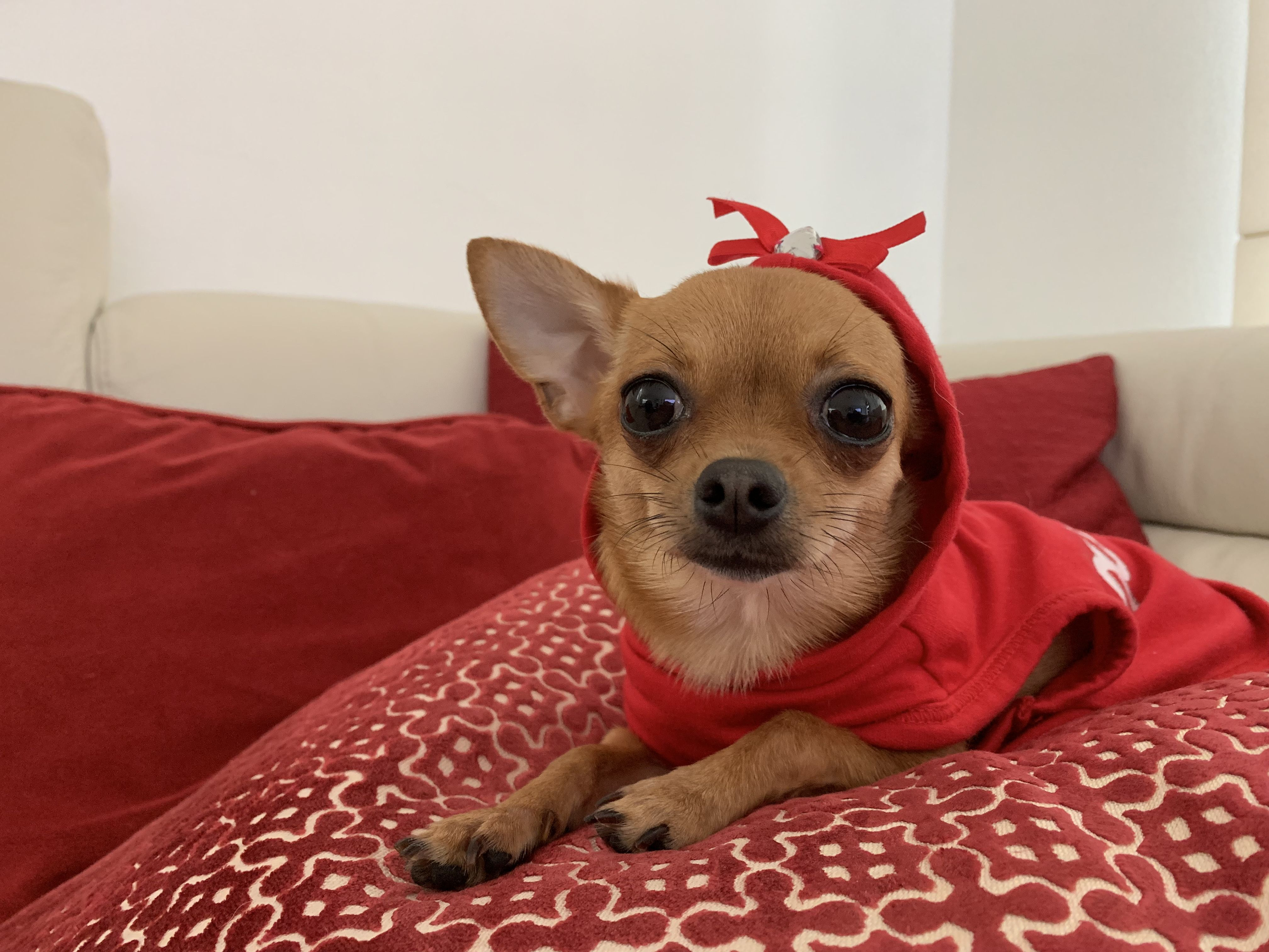 Little Red Riding Hood Pua In Her Red Hood Dresseddog Pua