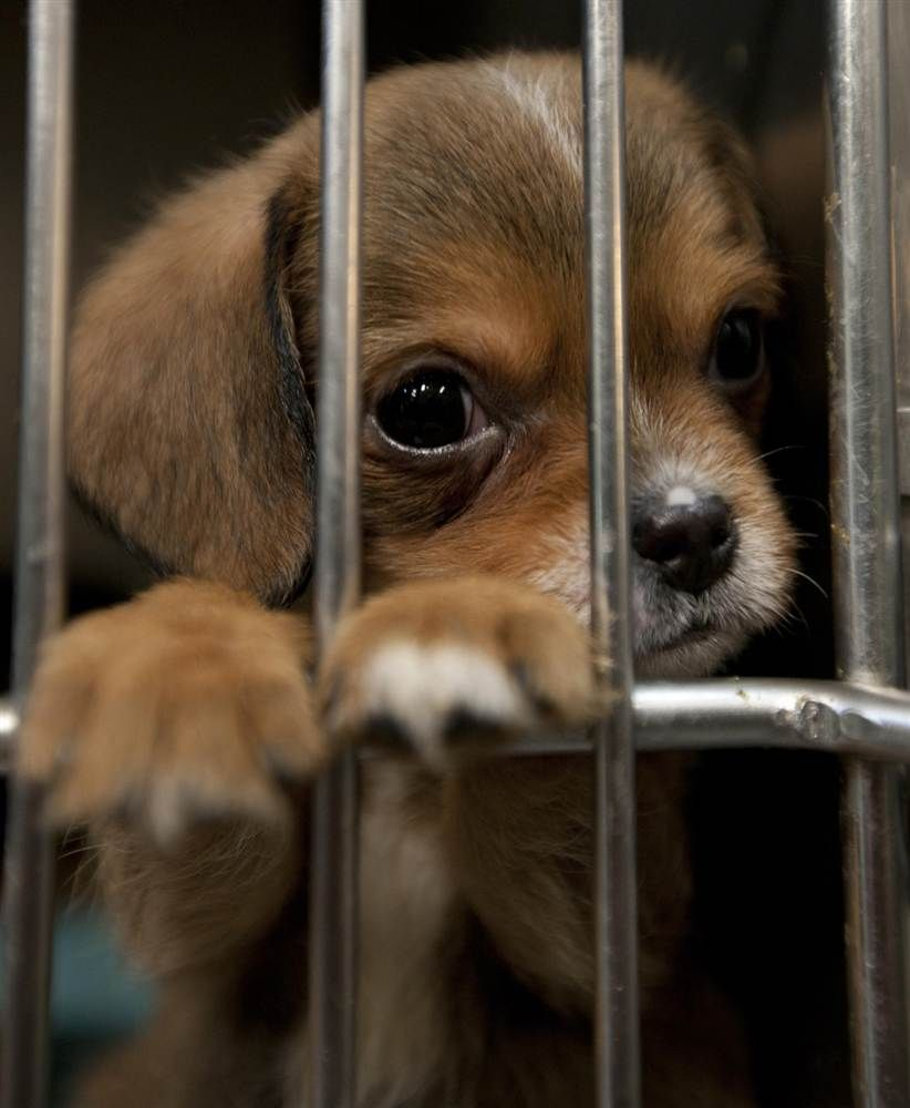 puppy puppies dogs waiting many there animals adopt cute homes forever dog cutest visit rescues funny