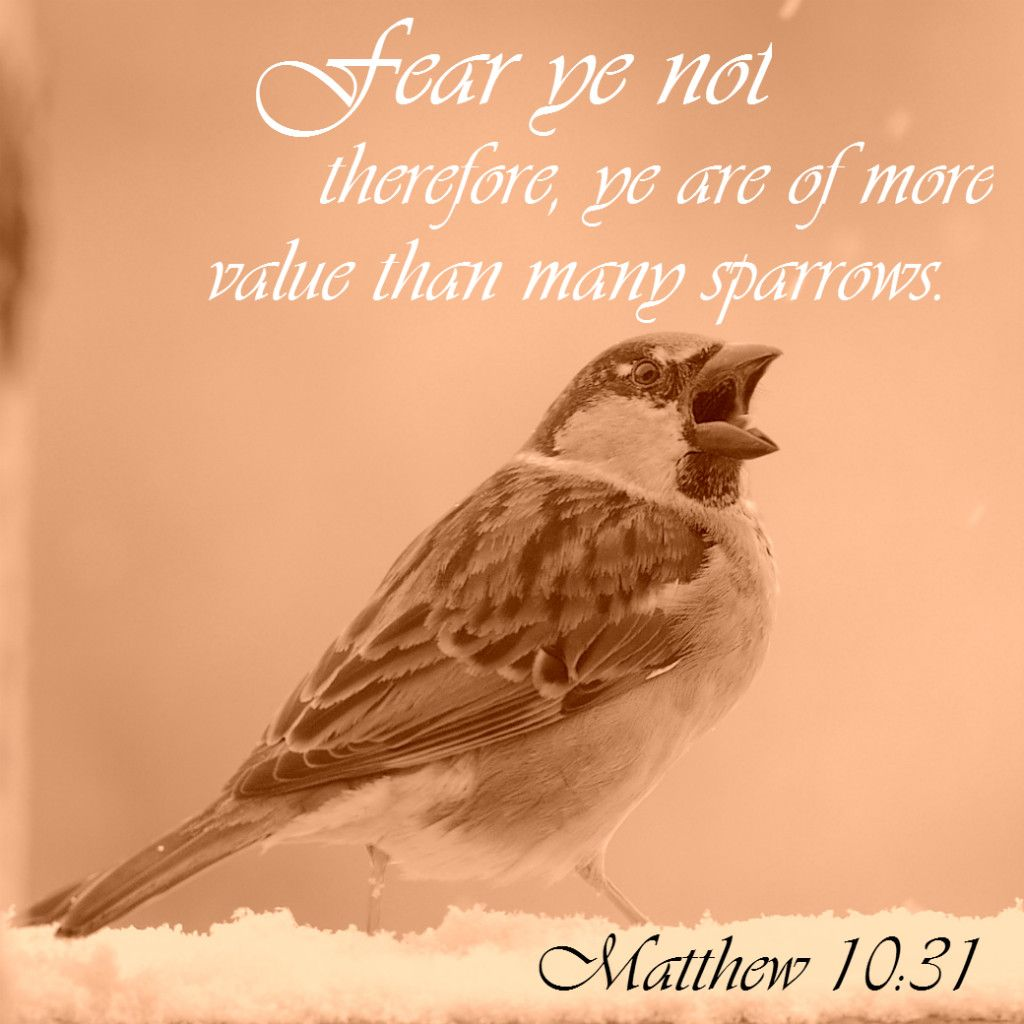 Matthew 1031 More Value Than Many Sparrows Bible Bibleverse