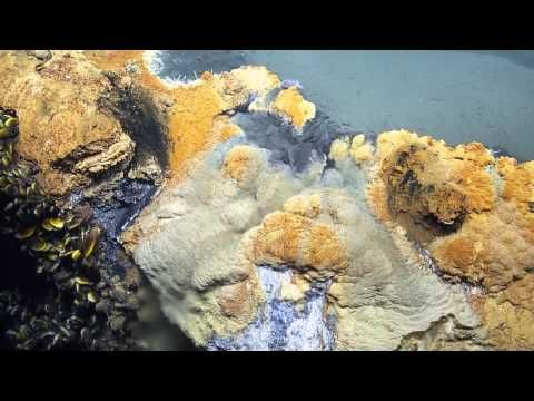 Check Out This Video Post For A Look At The Gulf Of Mexico S Deadly Underwater Brine Pool They Ve Nicknamed Gulf Of Mexico Underwater Lake Bottom Of The Ocean