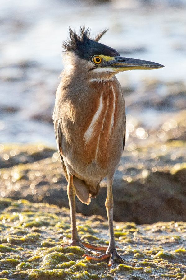 Striated Heron - windblown hairstyle by Kathrin Voss on 500px
