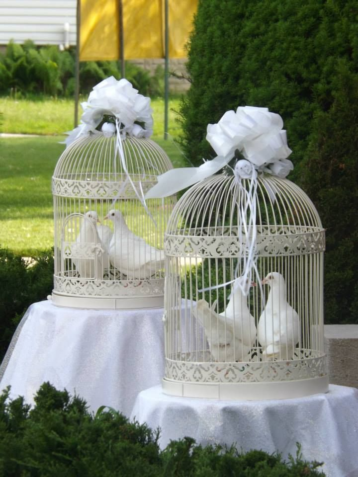 weding doves - Google Search