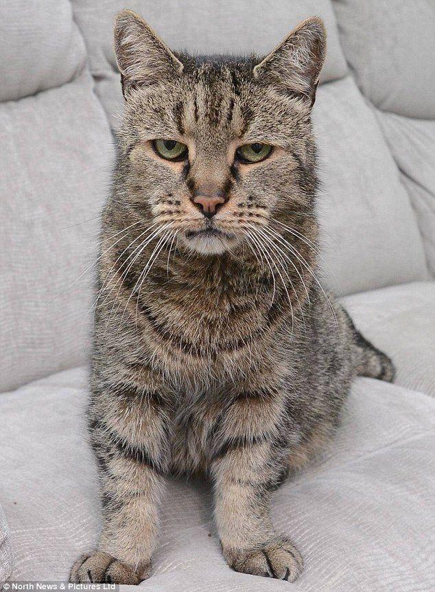 World S Oldest Cat Nutmeg Dies Aged 32 That S 144 In Cat Years Met Afbeeldingen Grappige Katten Katten Honden