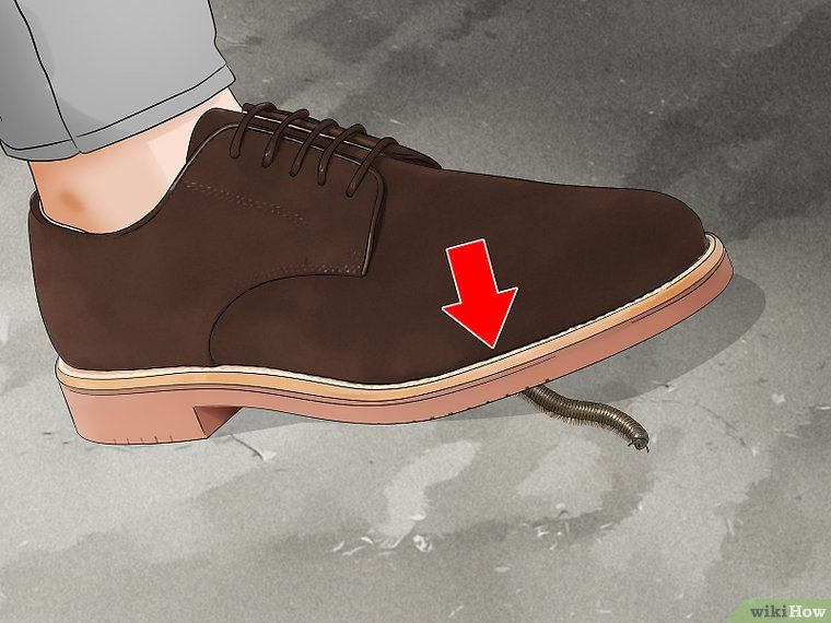 Get rid of millipedes how to get household pests sneakers