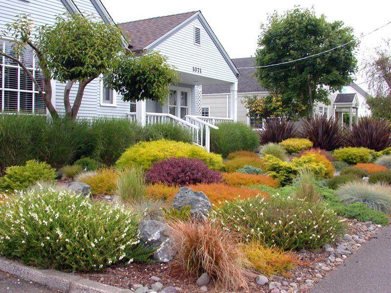 coastal no lawn garden perennials flowers landscaping gardening