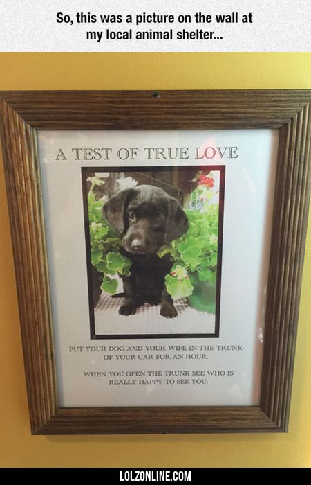 The Test Of True Love#funny #lol #lolzonline