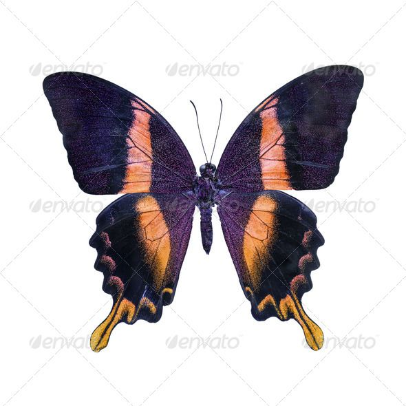 Realistic Graphic DOWNLOAD (.ai, .psd) :: http://jquery-css.de/pinterest-itmid-1006971570i.html ... butterfly ...  animal, background, bright, butterfly, insect, isolated, orange, white  ... Realistic Photo Graphic Print Obejct Business Web Elements Illustration Design Templates ... DOWNLOAD :: http://jquery-css.de/pinterest-itmid-1006971570i.html