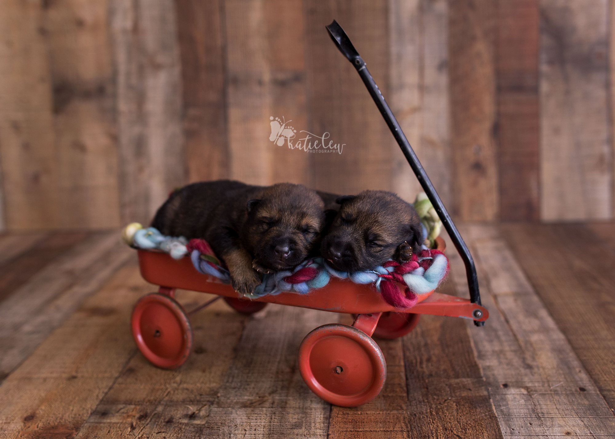Katielew Photography That Time I Photographed German Shepherd Puppies Stillwater Ok Photographer Northern Oklahoma Newborn Birth Photographer Blog In 2020 German Shepherd Puppies Puppy Photography Puppies