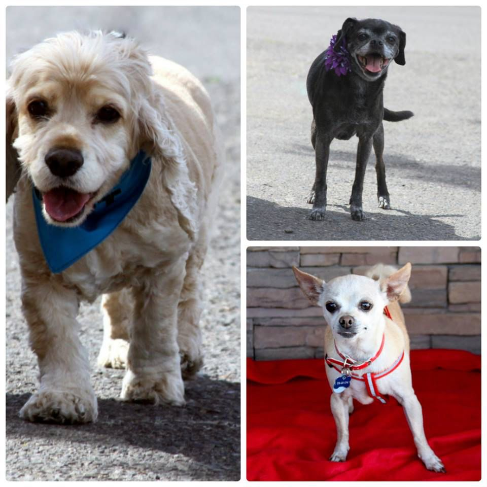 Come On Out Tomorrow 4 25 15 To Our Adoption Event At Pet Extreme In Fig Garden 11am Till 3pm Meet Our Adoptable Seniors Animal Rescue Pets Dog Adoption