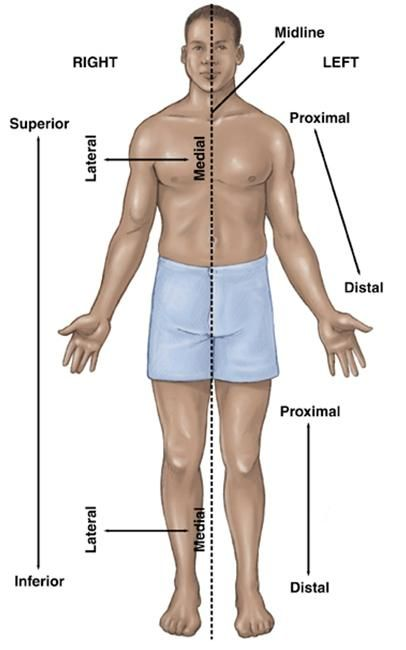 Human Anatomy Directional Terms | Anatomy and physiology 1 ...