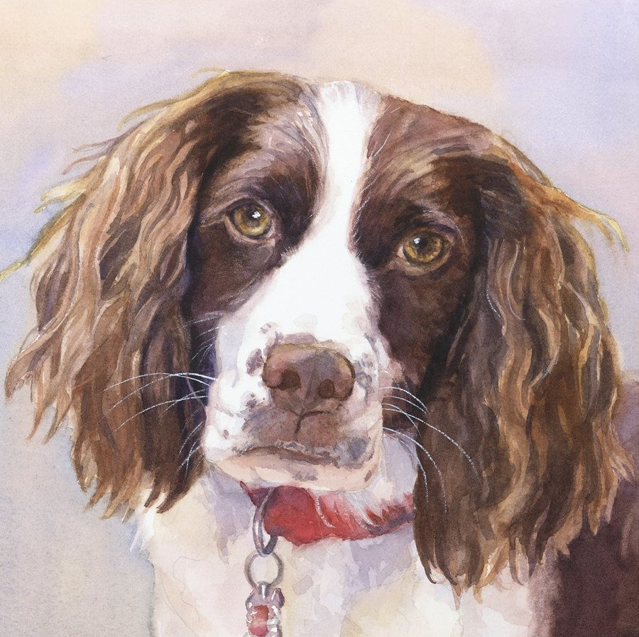 English Springer Spaniel Print of Watercolor Dog Painting