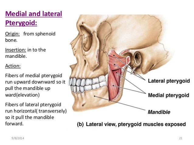 Medial and lateral Pterygoid: Origin: from sphenoid bone. Insertion ...