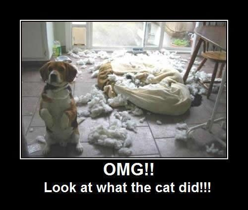 OMG!! Look what the cat did!!!