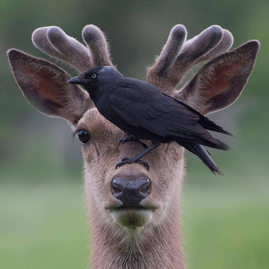 Junkyardmax Nature Animals Animals Wild Animals Friendship