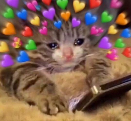 Backpacking cute cat memes heart, cute cat wallpaper kawaii, cute
