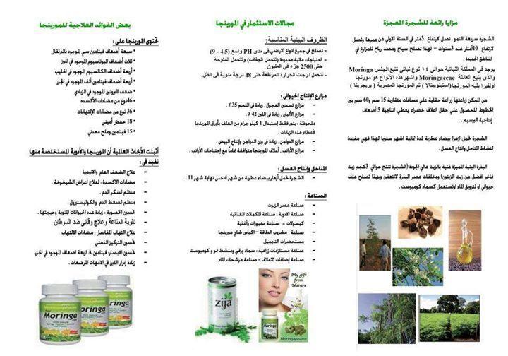 فوائد المورينجا غصن البان Health Food Remedies Health