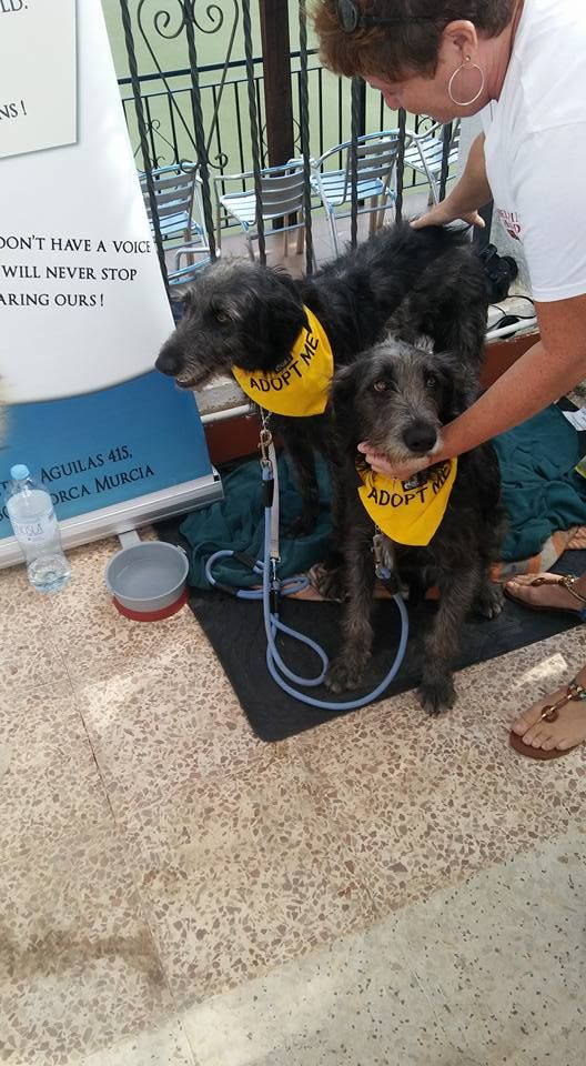 Adopt A Dog Day Roundup Mobile Internet And Uk Tv In Spain