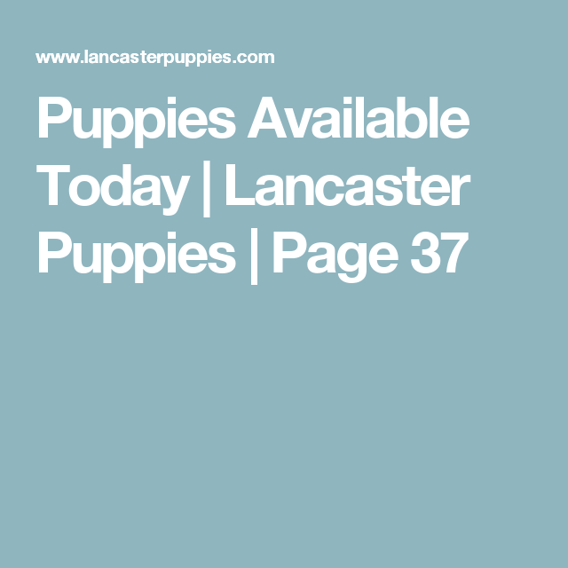 Puppies Available Today | Lancaster Puppies | Page 37