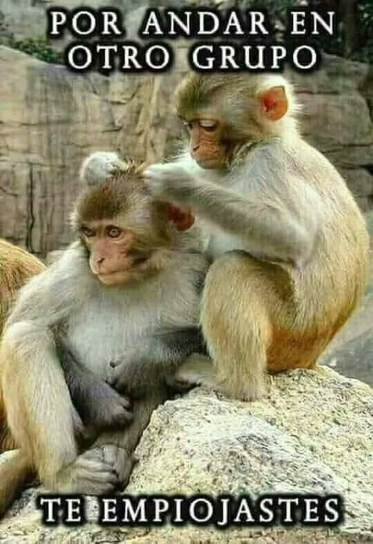 Pin De Rosa Fuentes En Monkey Memes Memes De Risa Memes Chistosisimos Imagenes De Risa Memes