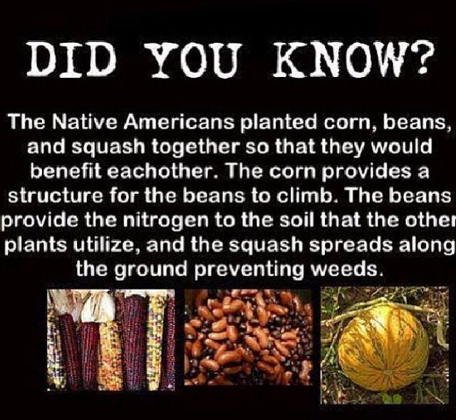 Corn Beans Squash
