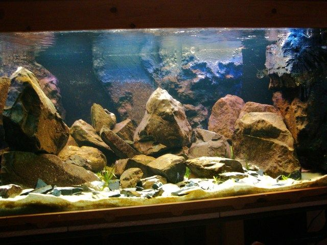 African cichlid tank lots of rocks in here i like it for African cichlid rock decoration