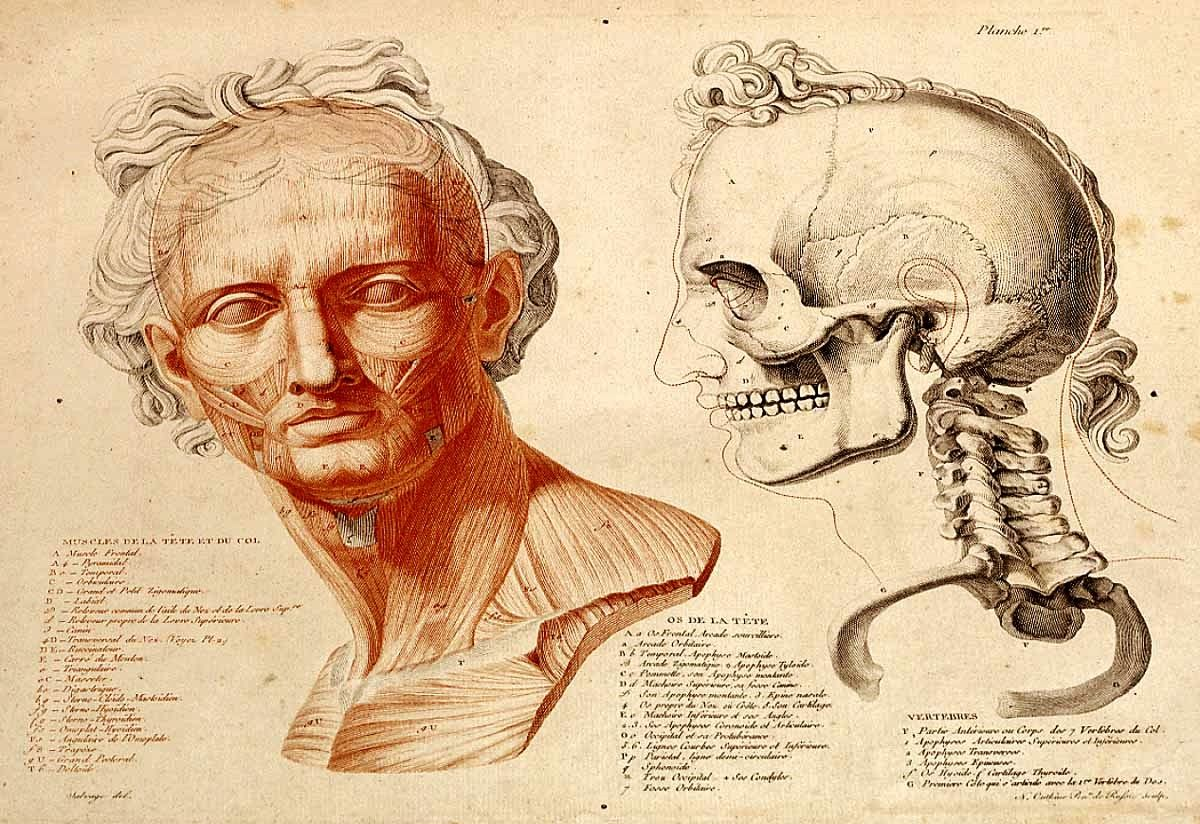 Anatomy of the Face. 1812.Jean Galbert Salvage. French 1770-1813 ...