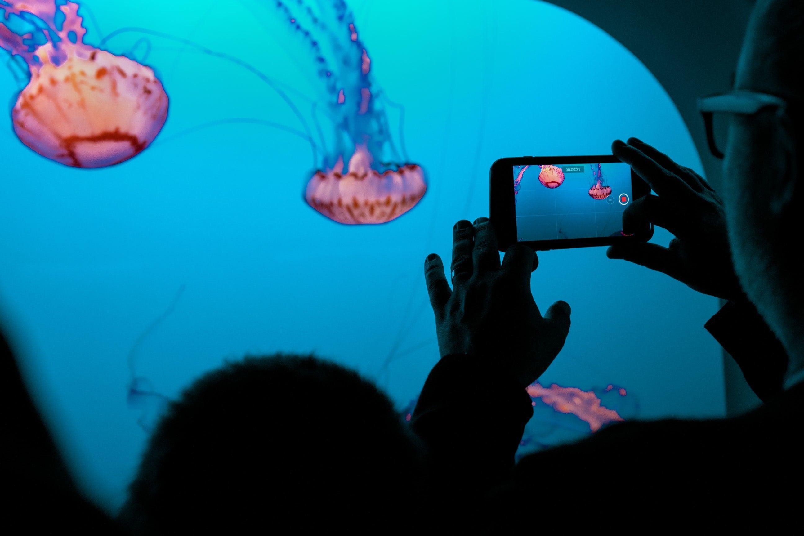 Aquarium pictures download free images on unsplash
