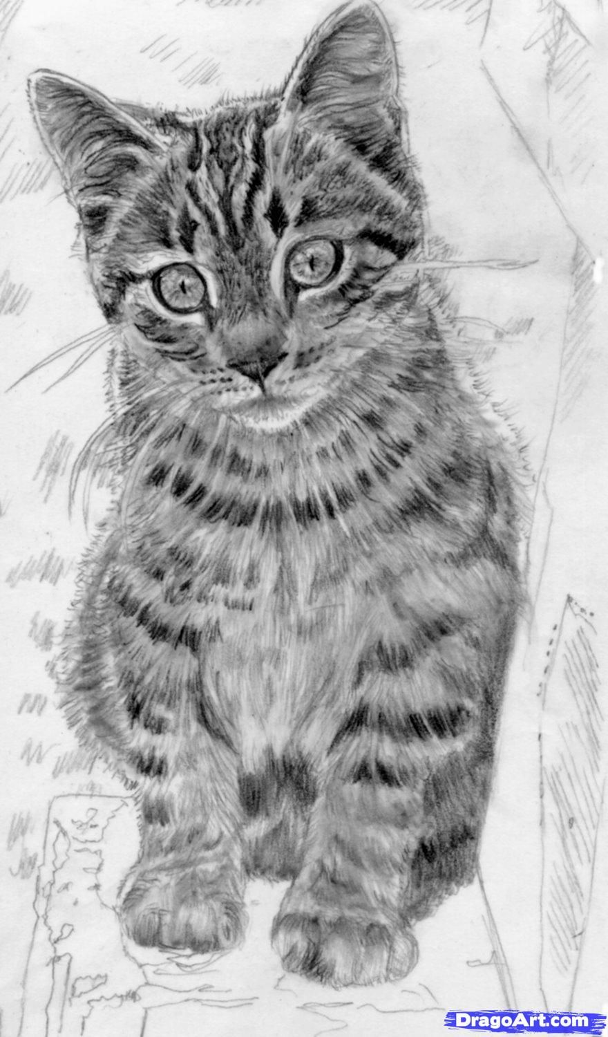 How to draw a cat Artsy Inspiration/To drawwatercolor