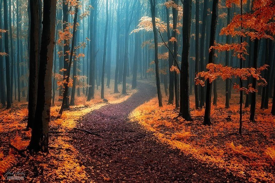 28 Breathtaking Forest Paths From Around The World. - http://www.lifebuzz.com/magical-forests/