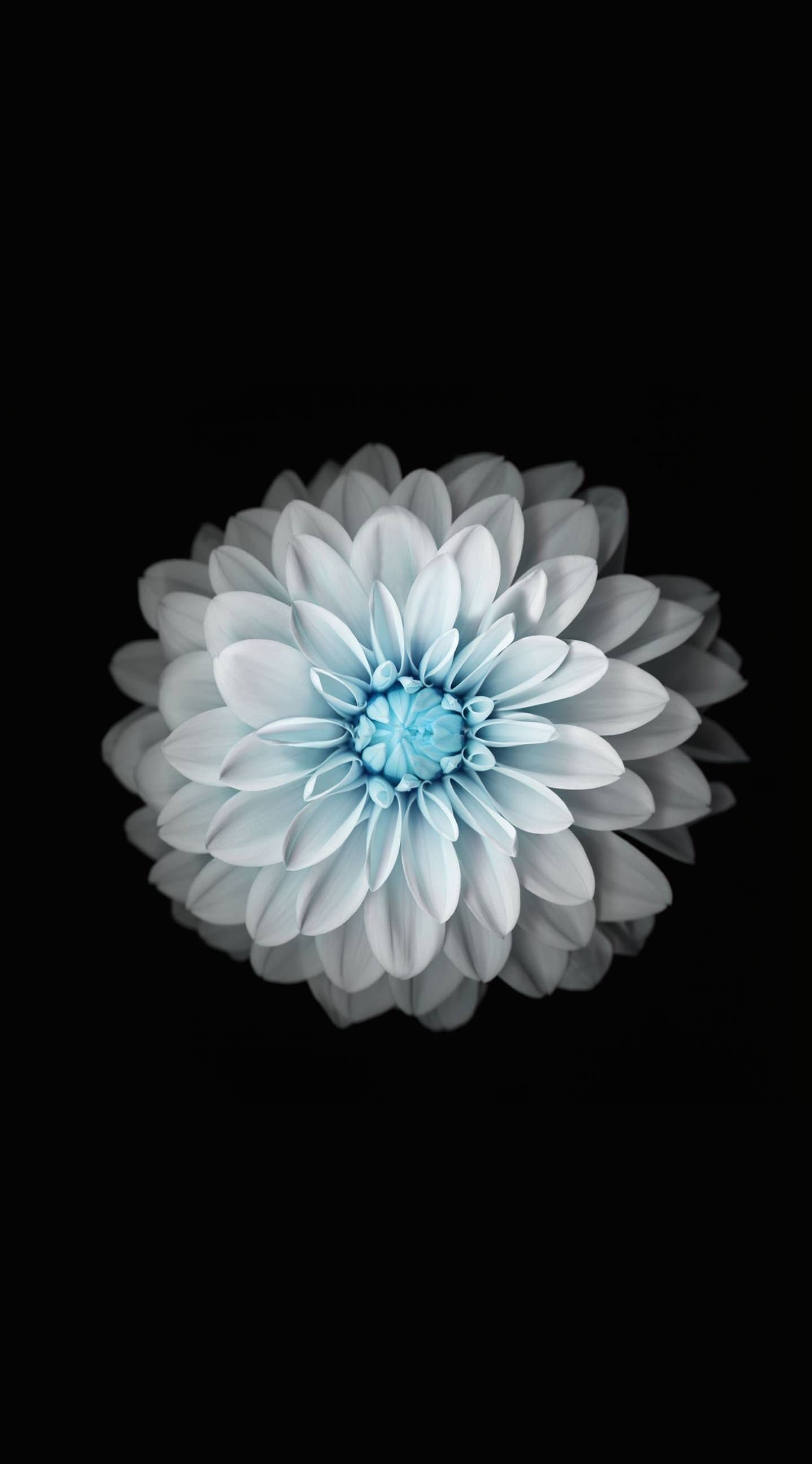 Iphone 6 Wallpapers Flower