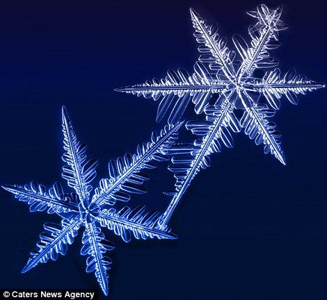 winters wonders amazing pictures of snowflakes captured