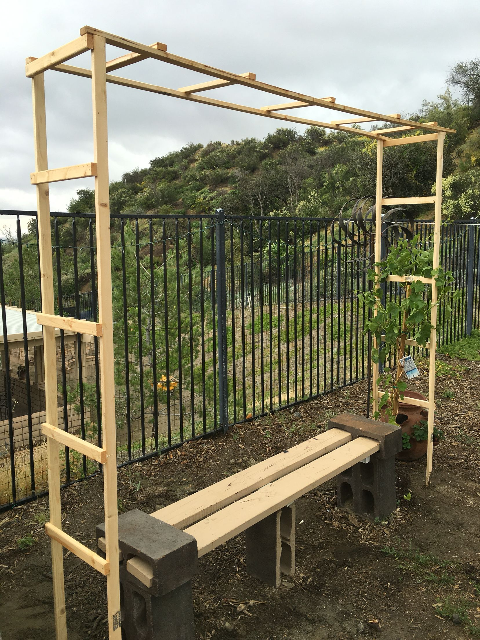 Superb Simple Trellis Ideas Part - 5: Trellis For My Grape Vine Simple Diy Under $10