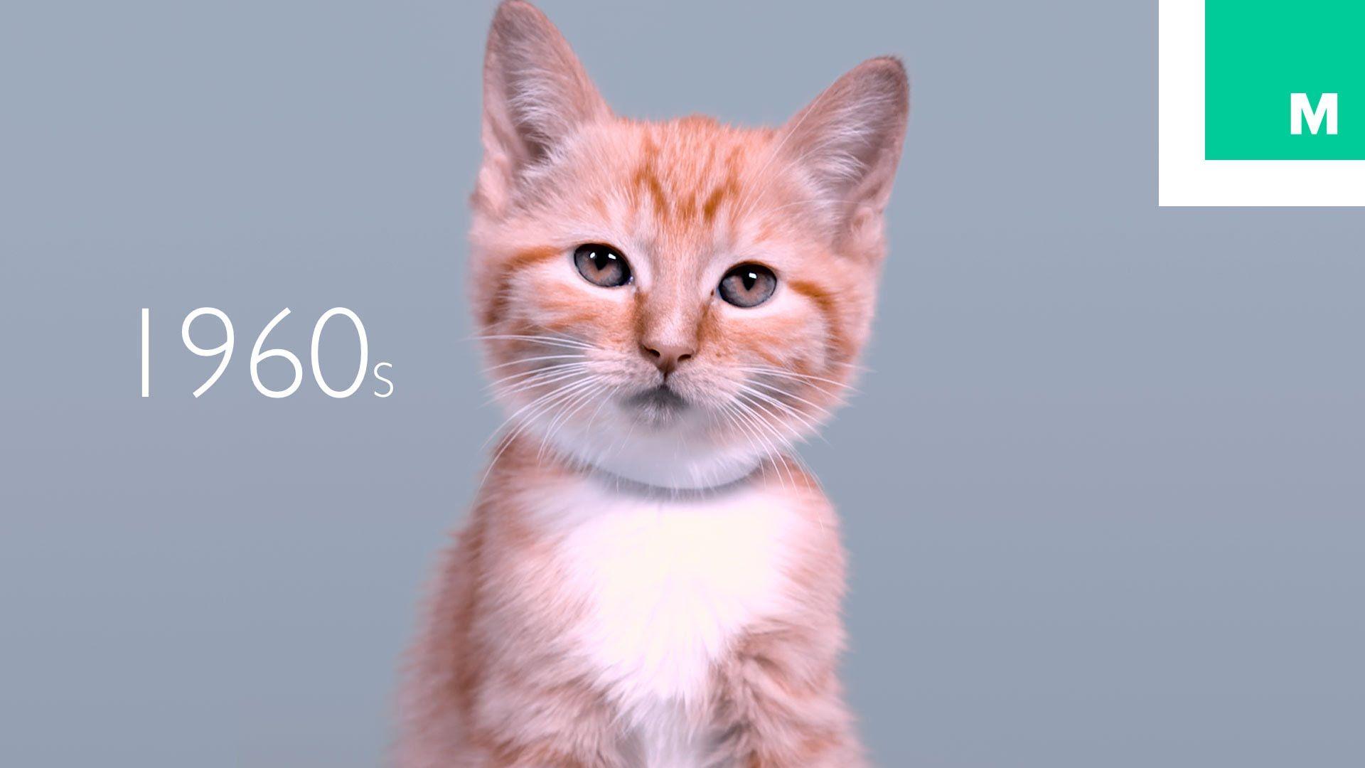 100 Years Of Kitten Beauty In 60 Seconds Animals Feline Scary Animals