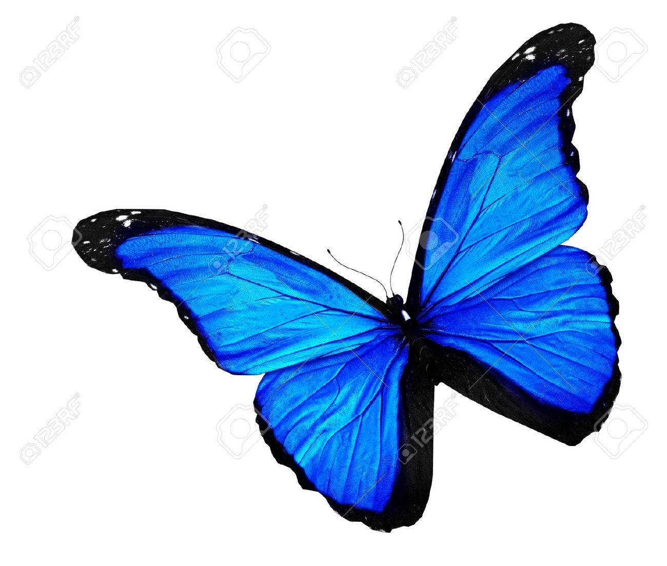 14372742-Mariposa-azul-en-el-fondo-blanco-Foto-de-archivo.jpg (1300 ...