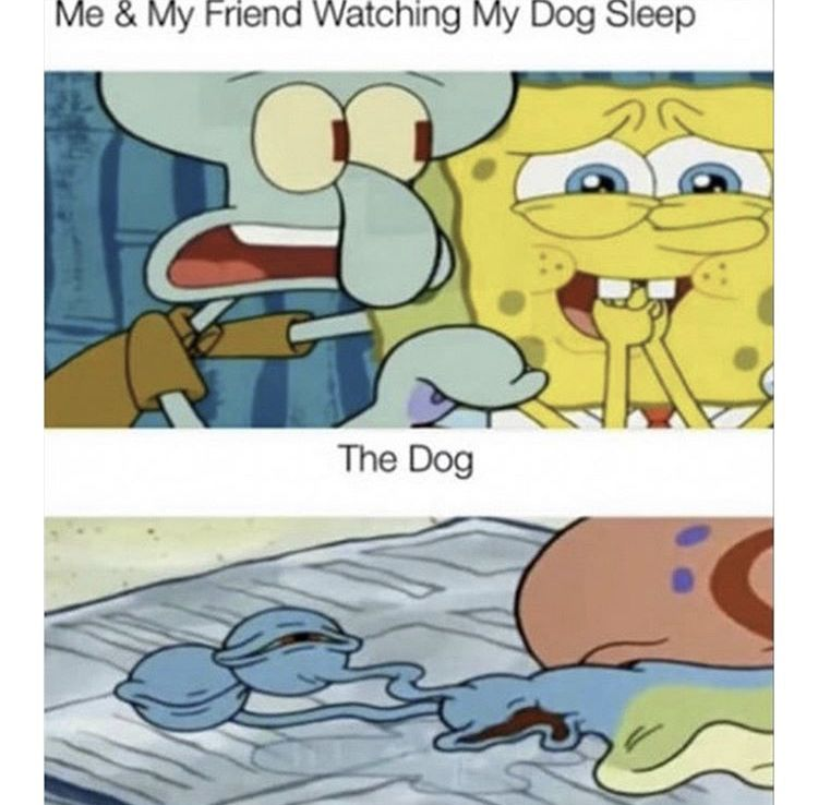 Pin By Drishya On Spongebob Memes Funny Spongebob Memes Spongebob Memes Funny Relatable Memes