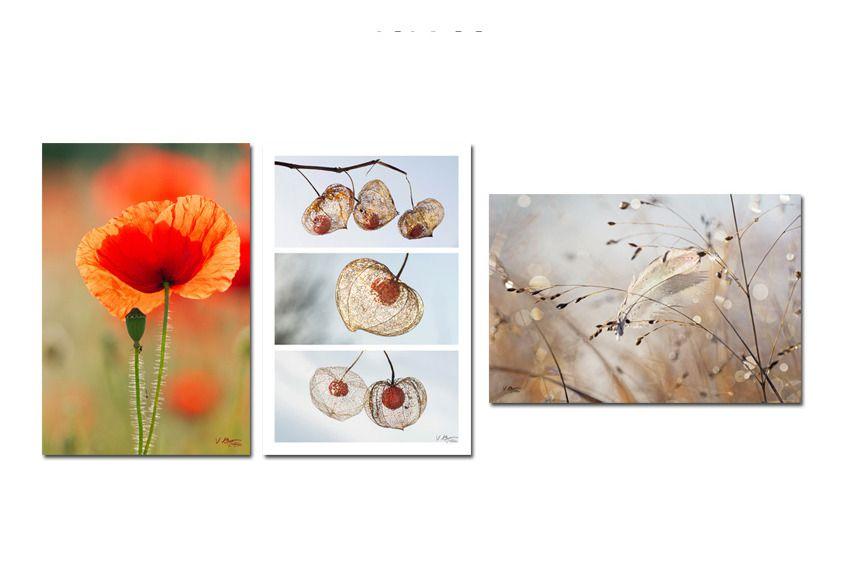 3 cartes postales nature de fleur de coquelicot, amour en cage et une plume : Cartes par couleurs-nature-deco